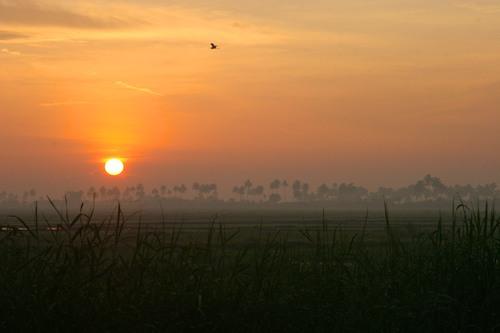 india2009-1319v2blog