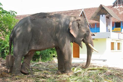 india2009-1488v2blog