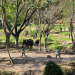 Patara Elephant Camp Overview