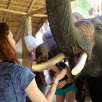 Feeding elephants at Patara Elephant Camp, Chiang Mai, Thailand