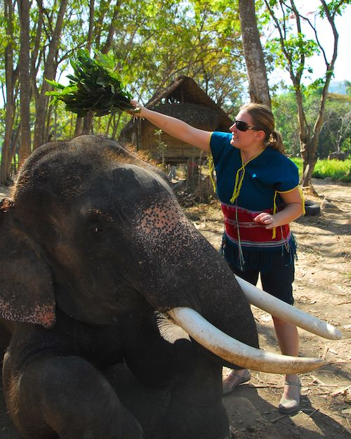 Missy brushing off her elephant at Patara Elephant Camp, Chiang Mai, Thailand