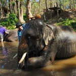 Cleaning our elephants at Patara Elephant Camp, Chiang Mai, Thailand