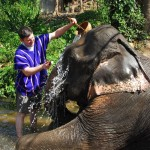 Jason cleaning elephant at Patara Elephant Camp, Chiang Mai, Thailand