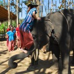 Getting on the elephant at Patara Elephant Camp, Chiang Mai, Thailand
