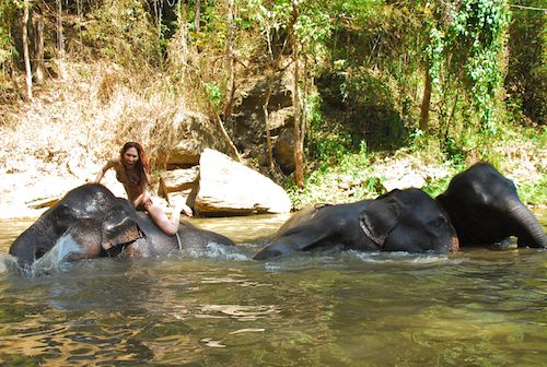 April swimming in a pool of elephants