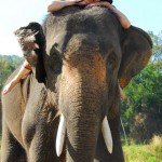 April Malina at Patara Elephant Camp, Chiang Mai, Thailand