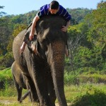 Jason Niedle at Patara Elephant Camp, Chiang Mai, Thailand