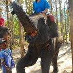 Holly Winslow at Patara Elephant Camp, Chiang Mai, Thailand