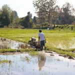 Sowing -- or mowing -- rice fields in Chiang Mai, Thailand