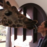 Giraffe Kissing April at Giraffe Manor in Nairobi during Wedding World Tour