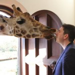Giraffe Kissing Jason at Giraffe Manor in Nairobi during Wedding World Tour