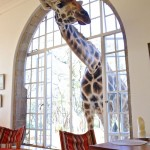 Breakfast at Giraffe Manor in Nairobi during Wedding World Tour