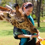 Feeding a giraffe at Giraffe Manor in Nairobi during Wedding World Tour