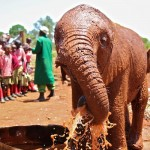 Elephant Orphanage in Nairobi, Kenya